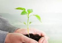 Global Biostimulants Market